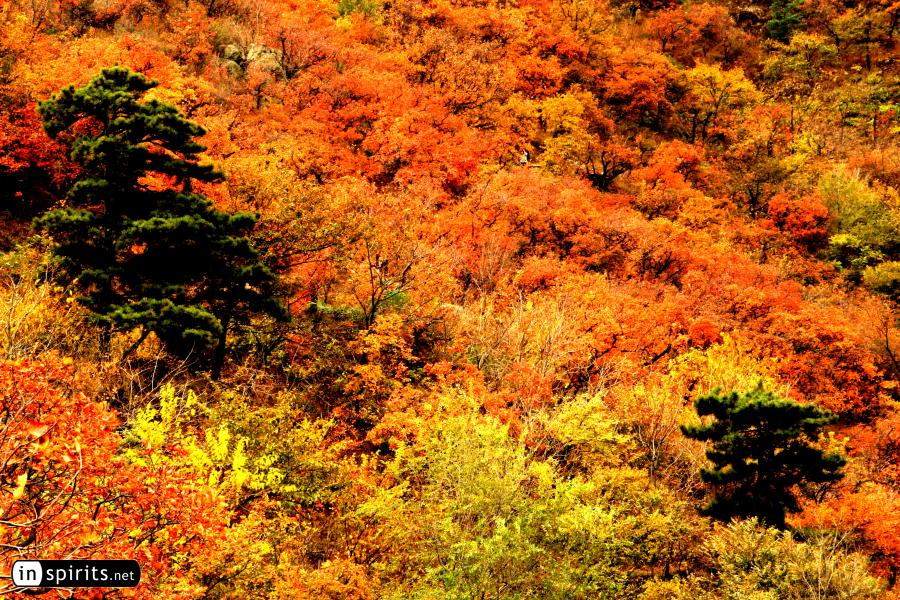 Beijing Forests exploding in autumn colors