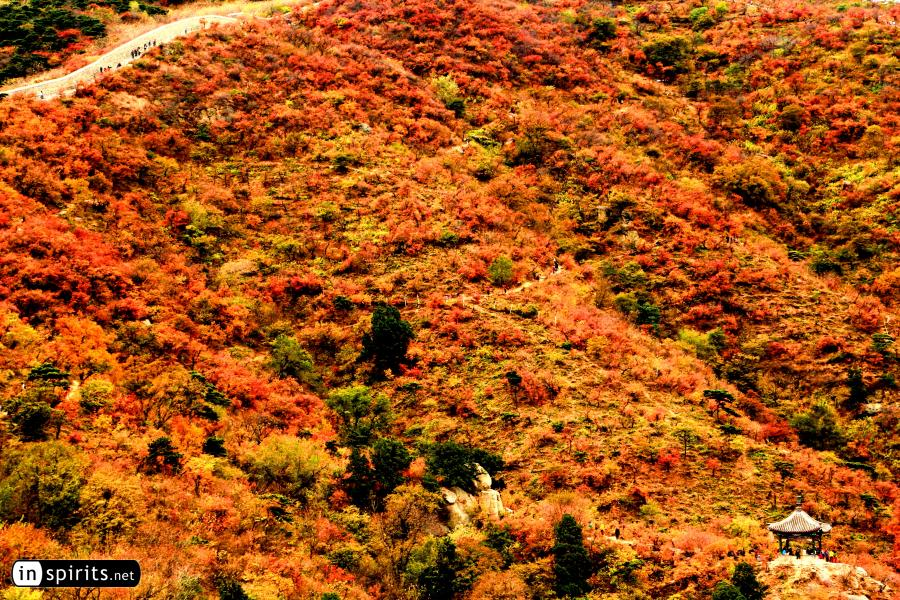 Autumn Colors at Fragrant Hills in Beijing
