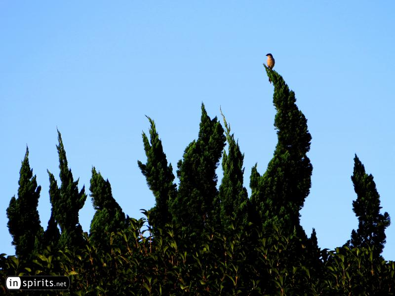 Bird Holding its Balance on a Crooked Tree Top