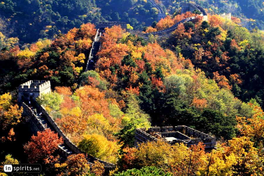 The Great Wall of Mutianyu explodes in autumn colors