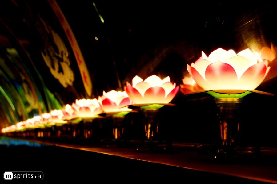 Lotus Lamps in Guilin