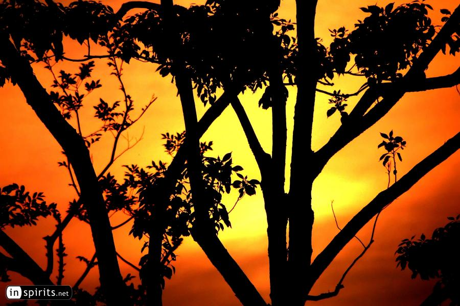 Trees in a park at sunset