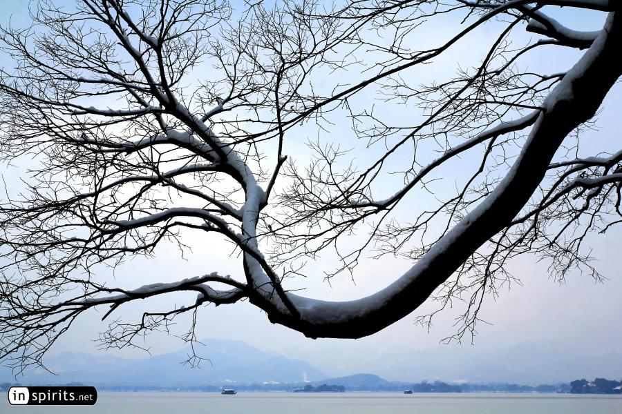 Snowy Tree at a West Lake winter scene in Hangzhou