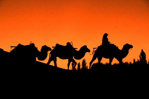 Sunset Silhouette of Camels in the Desert Oasis of Dunhuang