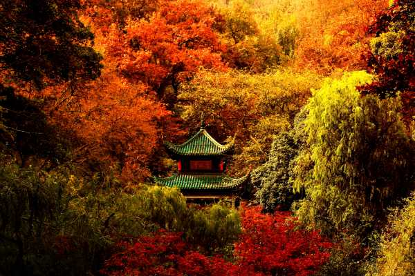 Chinese Pavilion Aiwanting Amidst A Sea of Autumn Colors