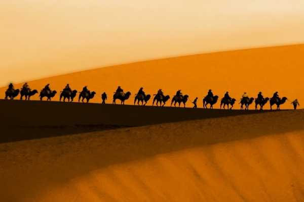 Caravan of camels in the Dunhuang desert