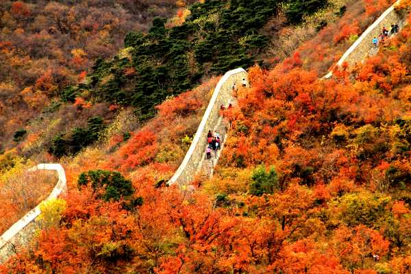 Autumn Colors at Fragrant Hills Park in Beijing
