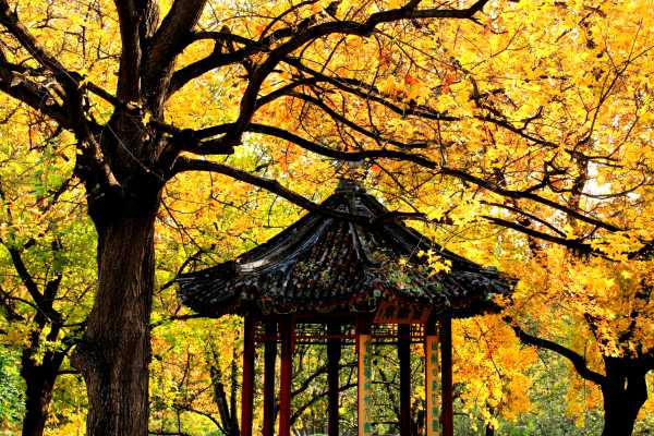 Pavilion amidst autumn colors in a Beijing Park